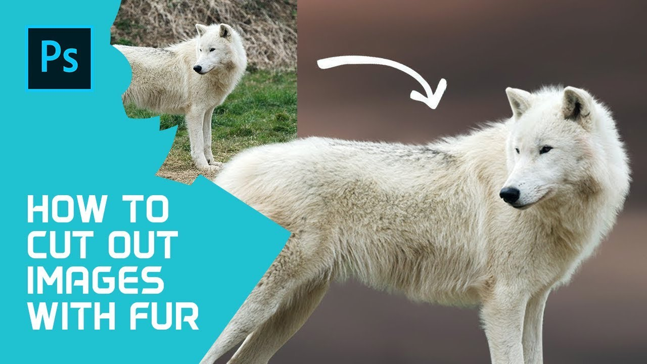 How To Cut Out Images With Fur or Hair