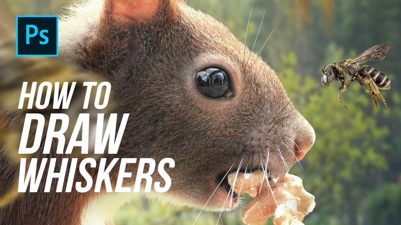 How To Draw Whiskers – Photoshop Tutorial