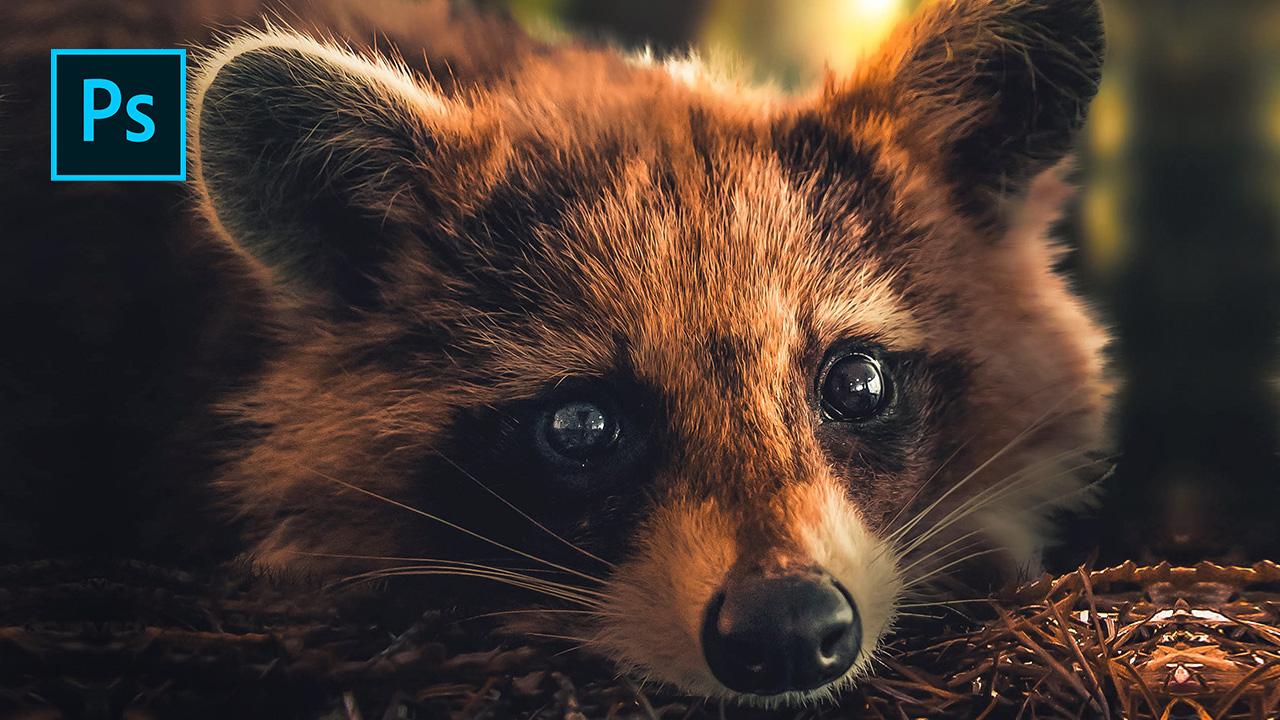 Raccoon – Photoshop Manipulation Tutorial
