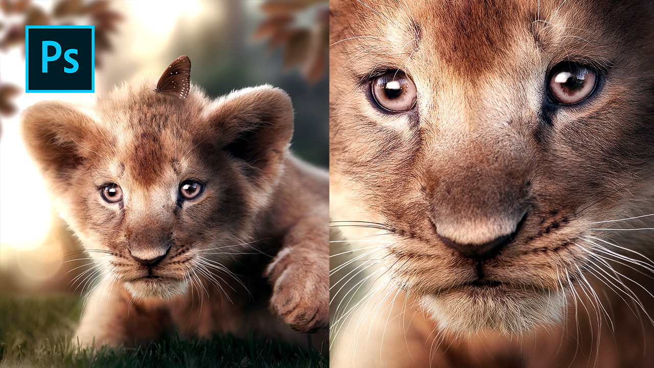 The Lion Cub & Butterfly – Photoshop Manipulation Tutorial