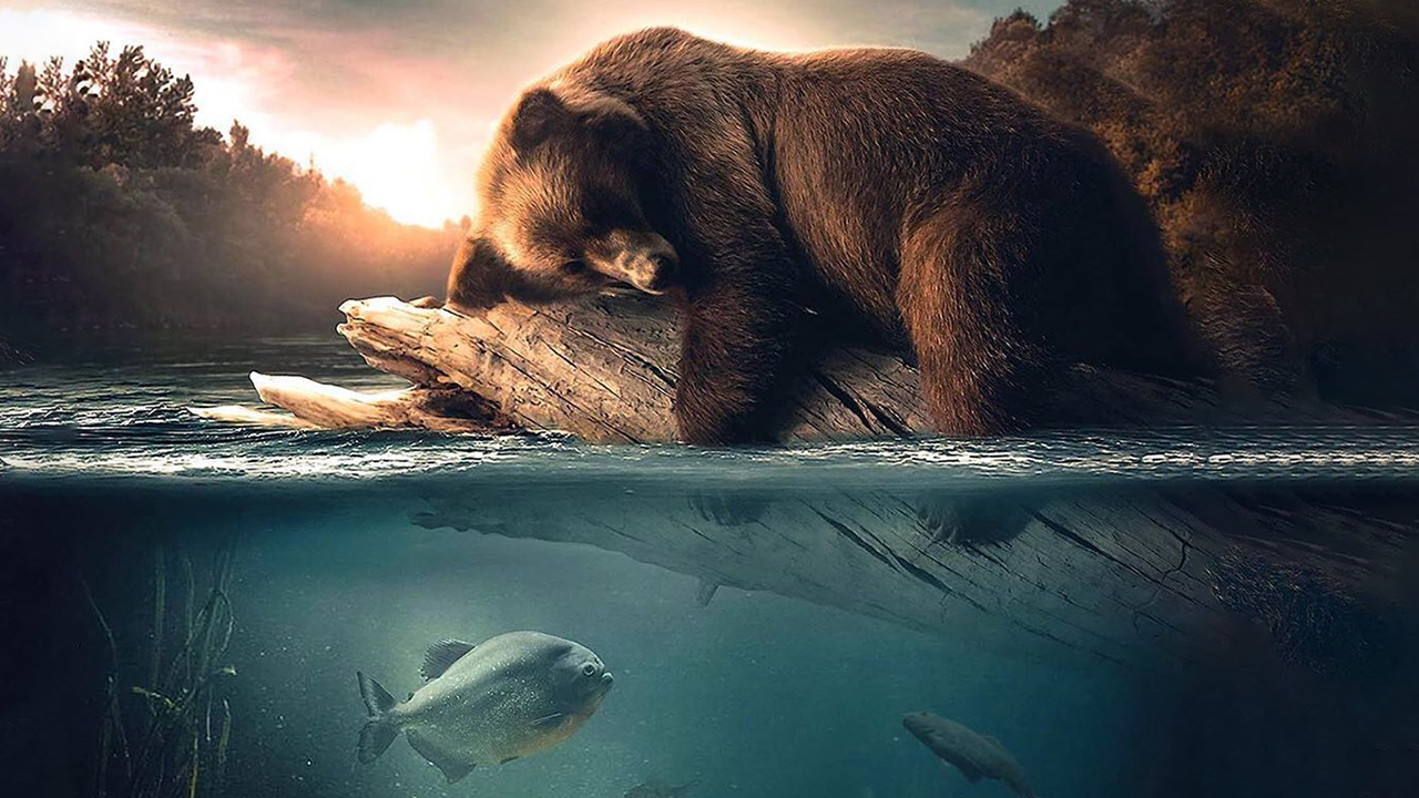 Floating Bear Manipulation in Photoshop Tutorial