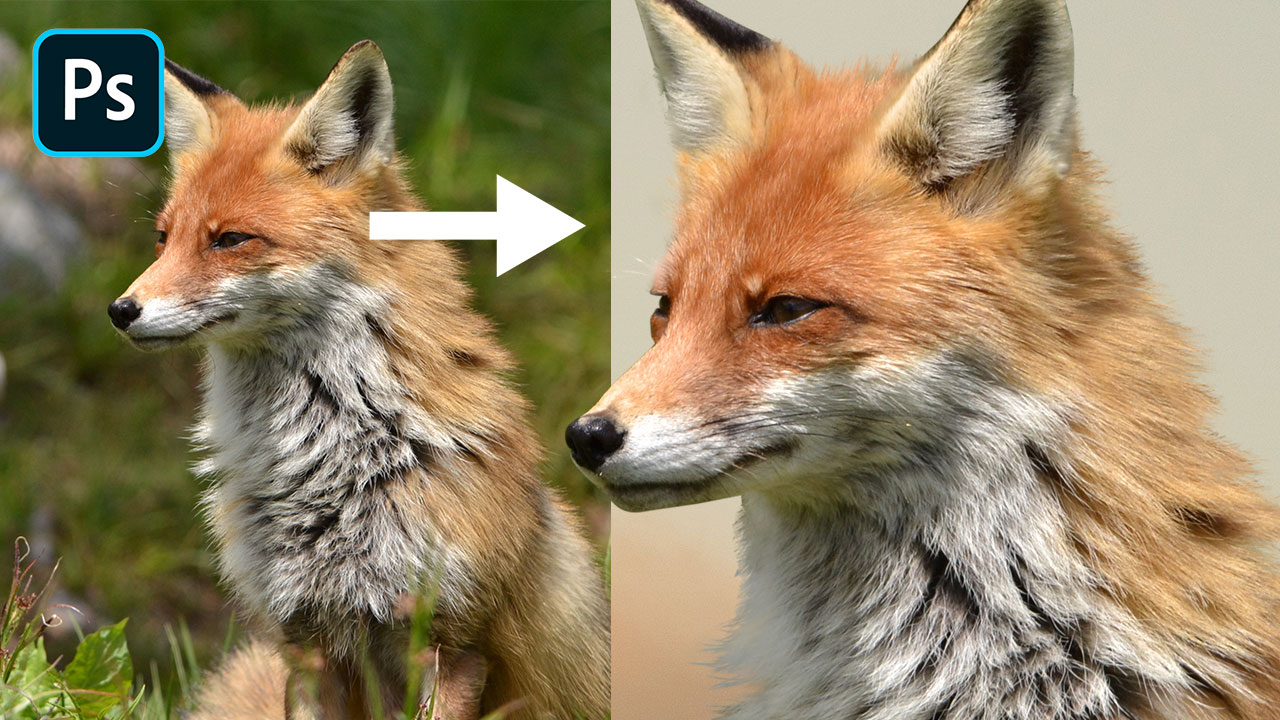 Photoshop Tutorial: Cut Out Animals With Lots of Fur